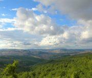 Panoramica del bosco di Fonti