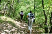 Escursione tra le dolomiti lucane da Castelmezzano nel bosco