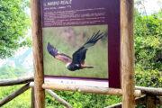 Cartellone naturalistico sui rapaci nelle Dolomiti Lucane